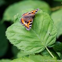 vlinder_MG_2315